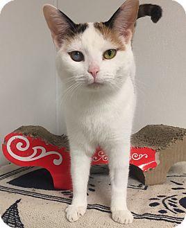 Calico Kitten for adoption in Hendersonville, North Carolina - Puppy