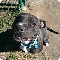 Adopt A Pet :: LIV TYLER - Gloucester, VA