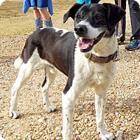 Adopt A Pet :: Dakota - St. Francisville, LA
