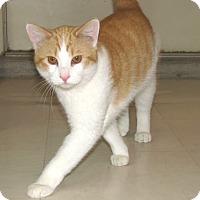 Adopt A Pet :: Ivan - Ruidoso, NM