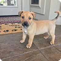 Adopt A Pet :: Nigel - Fort Atkinson, WI