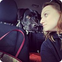 Adopt A Pet :: Duke - Brooklyn, NY