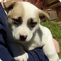 Adopt A Pet :: Piper (6 lb) Video - Sussex, NJ