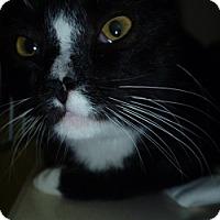 Adopt A Pet :: Clyde - Hamburg, NY