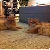 Adopt A Pet :: Apollo & Rocky - lake elsinore, CA