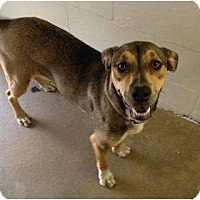 Adopt A Pet :: Xena - Winter Haven, FL
