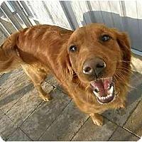 Adopt A Pet :: Koko - Meridian, ID
