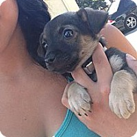 Adopt A Pet :: Rebel - Lake Forest, CA