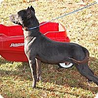 Adopt A Pet :: Ozzy - Pontotoc, MS