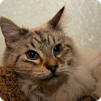 Adopt A Pet :: Hercules - Tucson, AZ