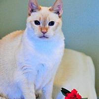 Adopt A Pet :: Buttercup - Duluth, GA