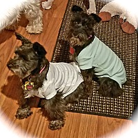 Adopt A Pet :: Belle & Winnie~~ADOPT PENDING - Sharonville, OH