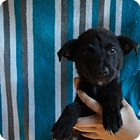 Adopt A Pet :: Asia - Oviedo, FL