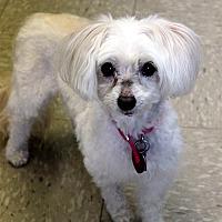 Adopt A Pet :: LuLu - Wichita, KS