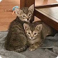 Adopt A Pet :: Kai - Houston, TX