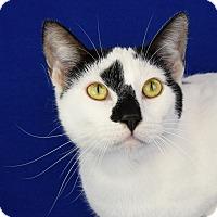 Adopt A Pet :: Tangi - Carencro, LA