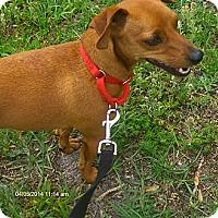 Adopt A Pet :: Milo - Jacksonville, FL