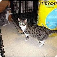 Adopt A Pet :: Regina - Baton Rouge, LA