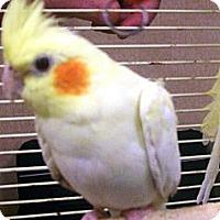 Adopt A Pet :: Jelly Bean - Lenexa, KS
