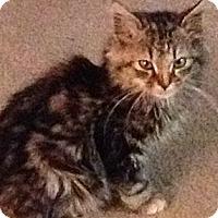 Adopt A Pet :: Windy - Monroe, GA