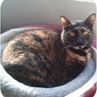 Adopt A Pet :: Brenda - Anchorage, AK