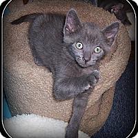Adopt A Pet :: Champ - A FANTASTIC KITTEN!! - South Plainfield, NJ
