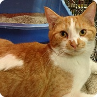 Adopt A Pet :: STEVIE - Diamond Bar, CA