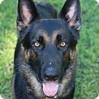 Adopt A Pet :: Dax - Ormond Beach, FL