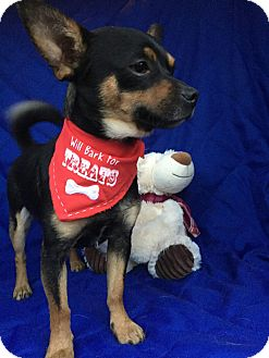 Terrier (Unknown Type, Small) Mix Dog for adoption in Manchester, Connecticut - Lucky meet me 12/2