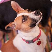 Adopt A Pet :: Taylor - Pittsburg, KS