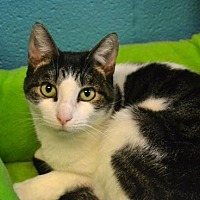 Adopt A Pet :: Jezabell *Special Adoption Fee - Akron, OH