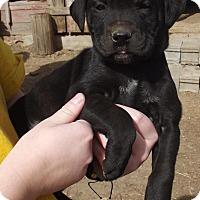 Adopt A Pet :: Naron - Lincoln, NE