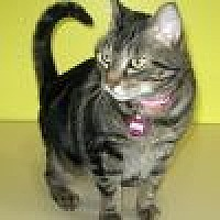 Adopt A Pet :: Thelma - Powell, OH