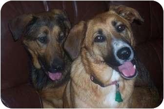 German Shepherd Dog Mix Dog for adoption in New Boston, New Hampshire - Sadie & Rosie~ Essex Jct.,VT