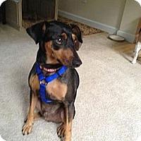 Adopt A Pet :: Guinness - Alexandria, VA