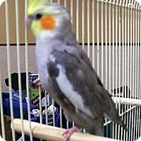 Adopt A Pet :: Dusty - Lenexa, KS