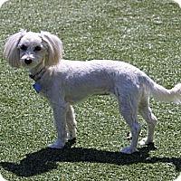 Adopt A Pet :: Vanna - South Amboy, NJ
