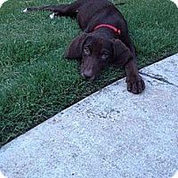Adopt A Pet :: Elsa - Cumming, GA