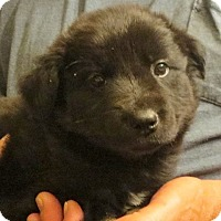 Adopt A Pet :: Cartwright - Salem, NH