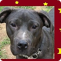 Adopt A Pet :: Lex - Roanoke, VA