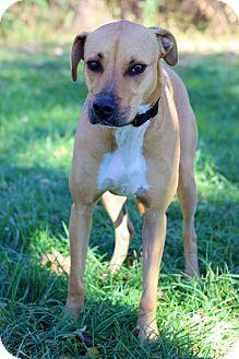 Hound (Unknown Type) Mix Dog for adoption in Waldorf, Maryland - Max