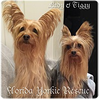 Adopt A Pet :: Lady and Tiggy - Palm City, FL