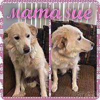 Adopt A Pet :: Mama Sue - Garden City, MI