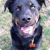 Adopt A Pet :: Lexie - Los Angeles, CA