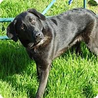 Adopt A Pet :: Rugar - Vacaville, CA