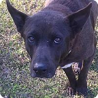 Adopt A Pet :: Sylvester - Blountstown, FL