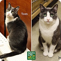 Adopt A Pet :: Tom & Jerry - Oakville, ON