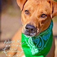 Adopt A Pet :: Jasper - Allen town, PA