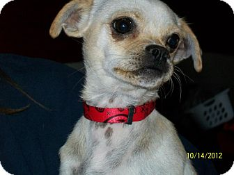 Pug Mix Puppy for adoption in Anaheim, California - Ruby