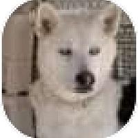 Adopt A Pet :: Elias - Kettle Falls, WA